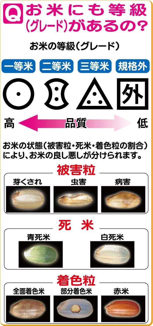 お米の等級は品質によって分けられます。